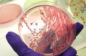 Entendendo a microbiologia